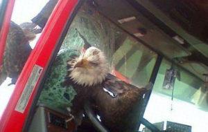 птица врезалась в автомобиль